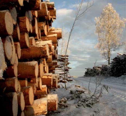 Tømmer vinter Foto Line Venn