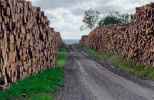 EKSPORT: Uten mottak på hjemmebane og egen industri, finner råstoffet og tømmeret veien ut av landet. Foto Line Venn