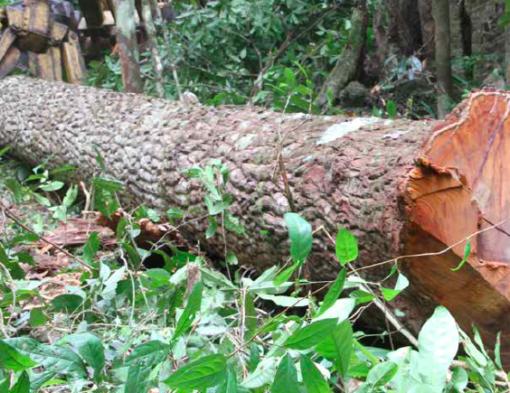 Avskogingen i Amazonas er høyere enn på lenge. Nylig kom oktobertallene fra overvåkingsorganet Imazon og disse er nesten 50% høyere enn i fjor. Manglende politikk og sanksjoner er årsaken. Her utenfor Belem, nord i Brasil. Foto Line Venn