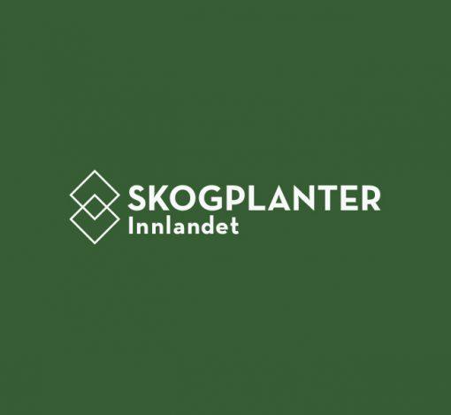 Skogplanter Innlandet - Webannonse, ledig stilling. Daglig leder.